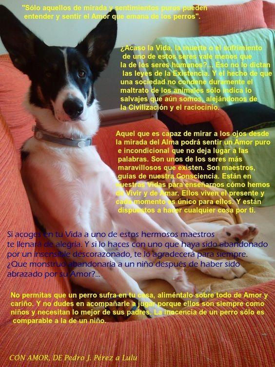 Los Perros, maestros del Amor y la Lealtad incondicional para los seres humanos 1